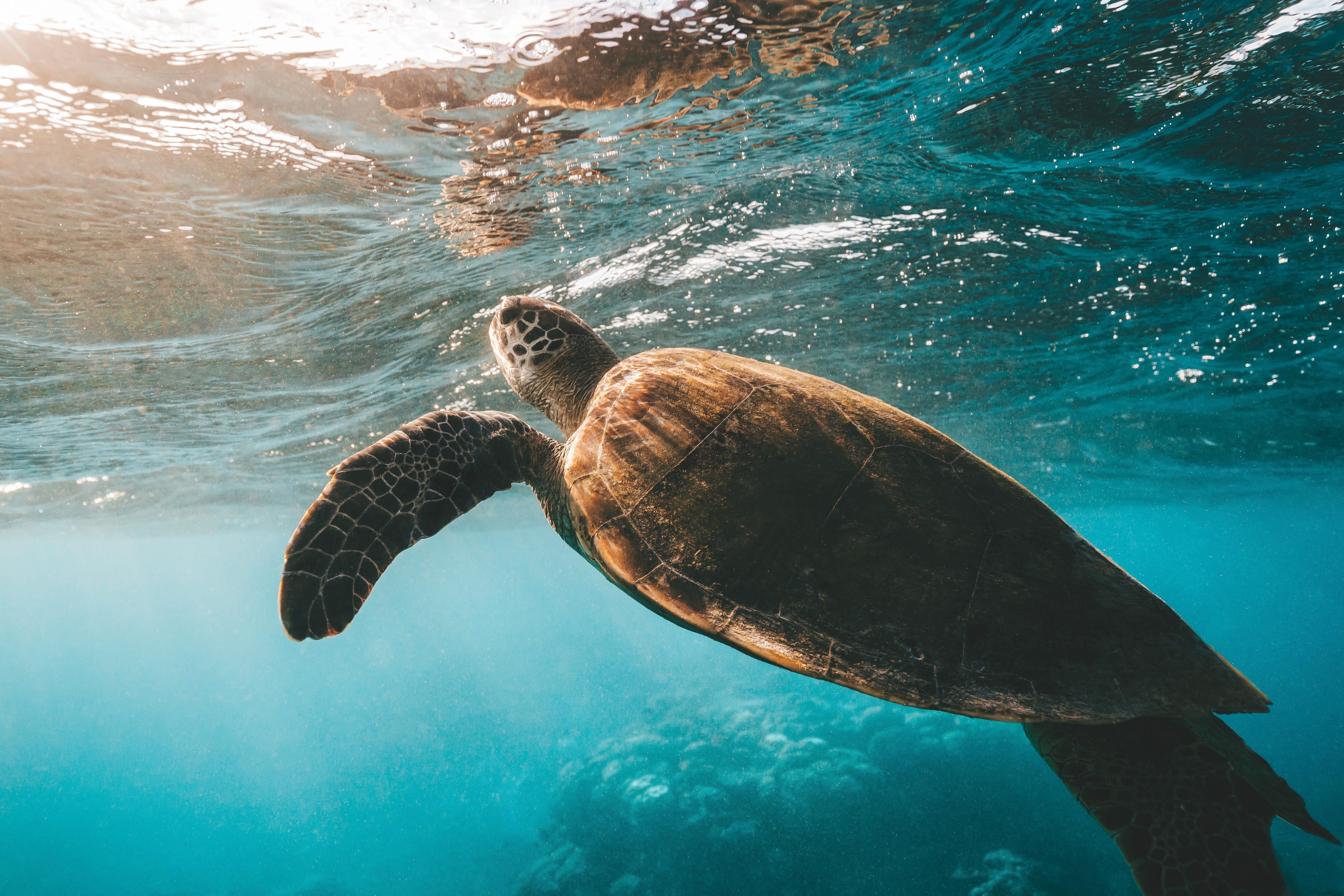 katie-turtle