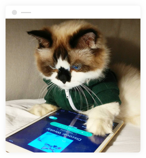 cat using spotify on a tablet